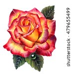 Rose.watercolor Illustration O...