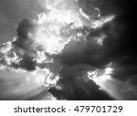 swamp plants | Shutterstock . vector #479701729