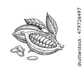 cocoa vector superfood drawing... | Shutterstock .eps vector #479726497