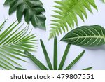 tropical green leaves | Shutterstock . vector #479807551