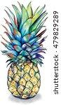 watercolor pineapple graphic... | Shutterstock . vector #479829289