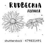 Rudbeckia Flower. Botanical...