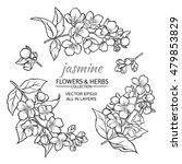 jasmine flowers set  on white... | Shutterstock .eps vector #479853829