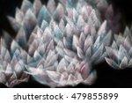 gentle radiant lotus flower... | Shutterstock . vector #479855899