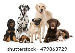 Stock photo different dogs isolated on white 479863729