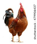 colorful rooster isolated on... | Shutterstock . vector #479906437