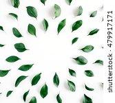 green leaves frame on white... | Shutterstock . vector #479917171
