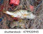 the fishing is the livelihood...   Shutterstock . vector #479920945