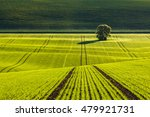 spring morning on fresh green... | Shutterstock . vector #479921731