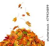 Pile Of Autumn Maple Colored...
