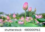 The Lotus Bud Early Sun Vibran...