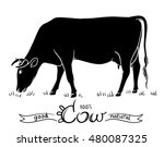 cow eating grass. black and... | Shutterstock .eps vector #480087325