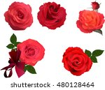 Stock vector illustration with five rose flowers isolated on white background 480128464