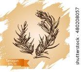 vector background sketch... | Shutterstock .eps vector #480208057