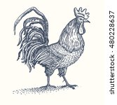 rooster or cock hand drawn... | Shutterstock .eps vector #480228637