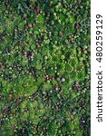 sucullent plants garden.... | Shutterstock . vector #480259129