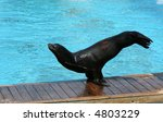 2.the Sea Lion.