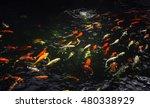 Blur Koi Fish Swimming In Wate...