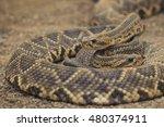 Snake In Desert