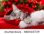 Stock photo sleeping christmas kitten 480433729