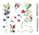 autumn forest plants set.... | Shutterstock . vector #480495625
