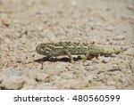 chameleon walking on a yellow... | Shutterstock . vector #480560599