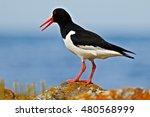 Bird In The Sea Coast....