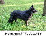 black dog on the nature | Shutterstock . vector #480611455