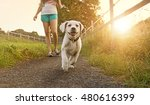 walk of a young woman with dog... | Shutterstock . vector #480616399