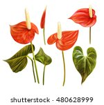 Tropical Floral Set. Anthurium...
