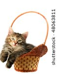 Stock photo kitten in basket 48063811