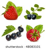 photo realistic vector... | Shutterstock .eps vector #48083101
