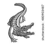 crocodile  alligator or animal... | Shutterstock .eps vector #480903487