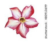 Red Tropical Flower Drawing....