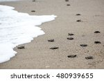 Hatching Baby Turtles Free To...