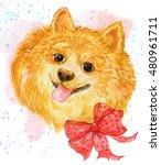 Cute Puppy .dog Breed Spitz...