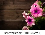 Beautiful Pink Petunias On A...