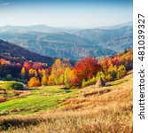 colorful autumn morning in... | Shutterstock . vector #481039327