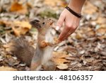 Squirrel Eat Peanuts With A...
