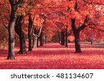 Autumn Park With Color Trees A...