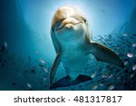 dolphin underwater on reef... | Shutterstock . vector #481317817