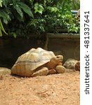 Small photo of African Spurred Tortoise in the garden