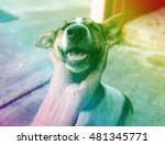 Stock photo happy dog with tongue out and head tilt dog happy and dog hand 481345771