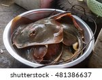 stingray at crab market in kep  ... | Shutterstock . vector #481386637