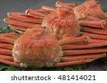 crab | Shutterstock . vector #481414021
