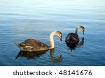 two young swans | Shutterstock . vector #48141676