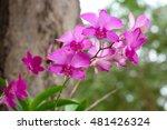 orchid | Shutterstock . vector #481426324