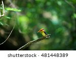 birds   nature life   black... | Shutterstock . vector #481448389