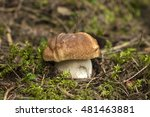 Small photo of Porcini. Porcini in the beautiful place in the forest in Carpathians. Porcini white mushroom macro nature photo.