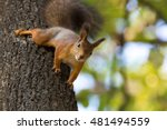 The Photograph Shows A Squirre...